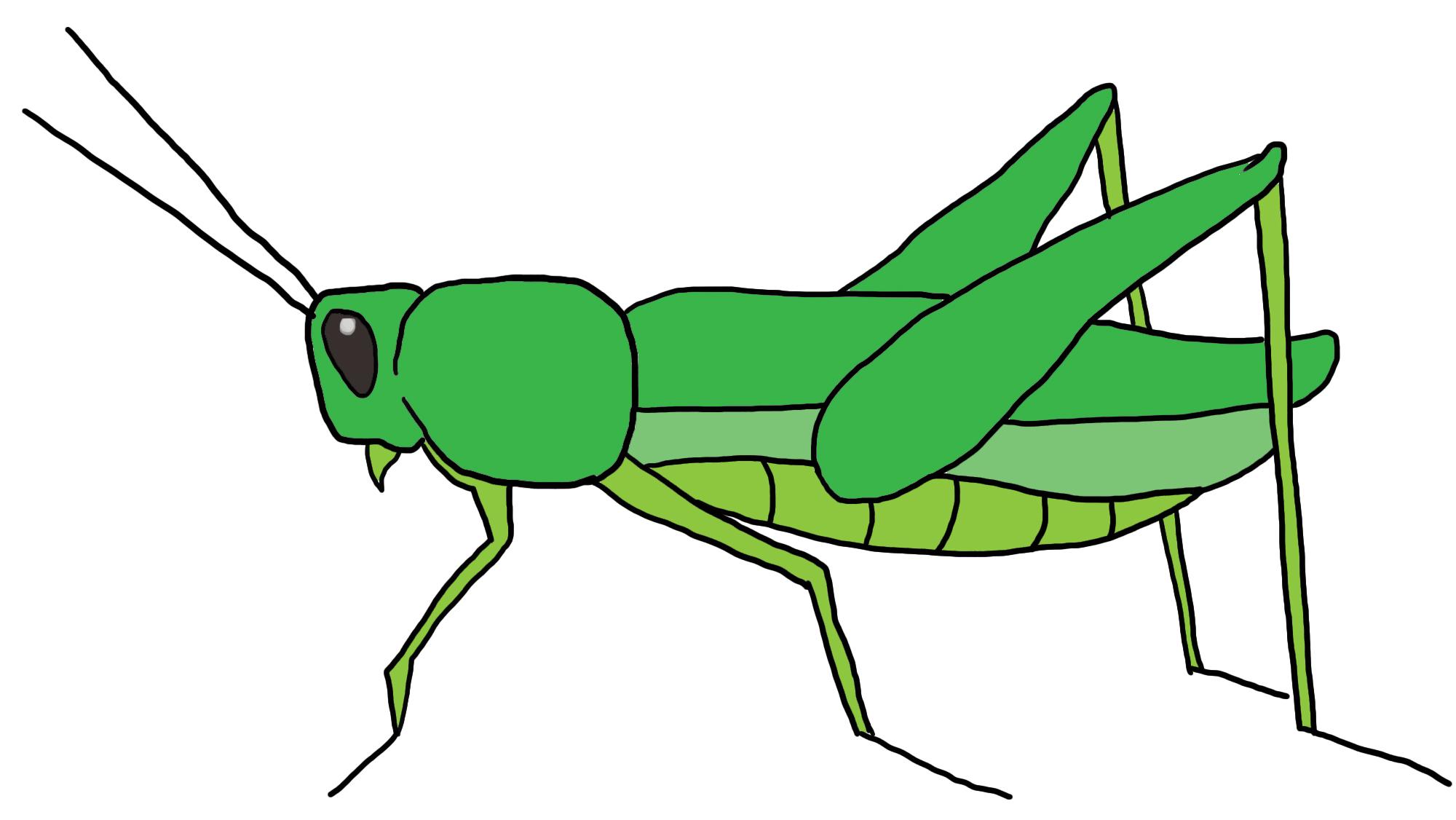 Grasshopper Clip Art-Grasshopper Clip Art-7