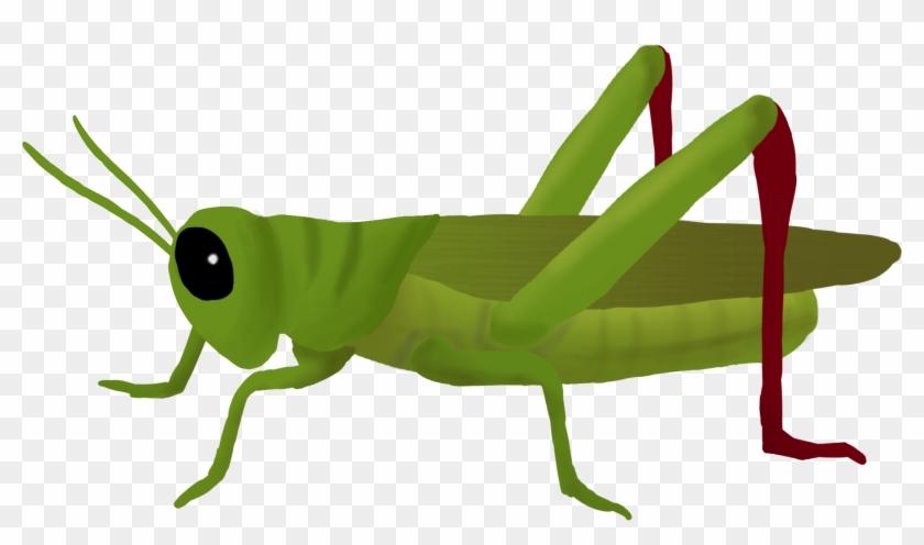 Grasshopper - Grasshopper Clipart-Grasshopper - Grasshopper Clipart-11