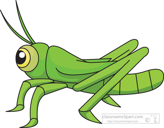 Grasshopper-insects-978.jpg-grasshopper-insects-978.jpg-12