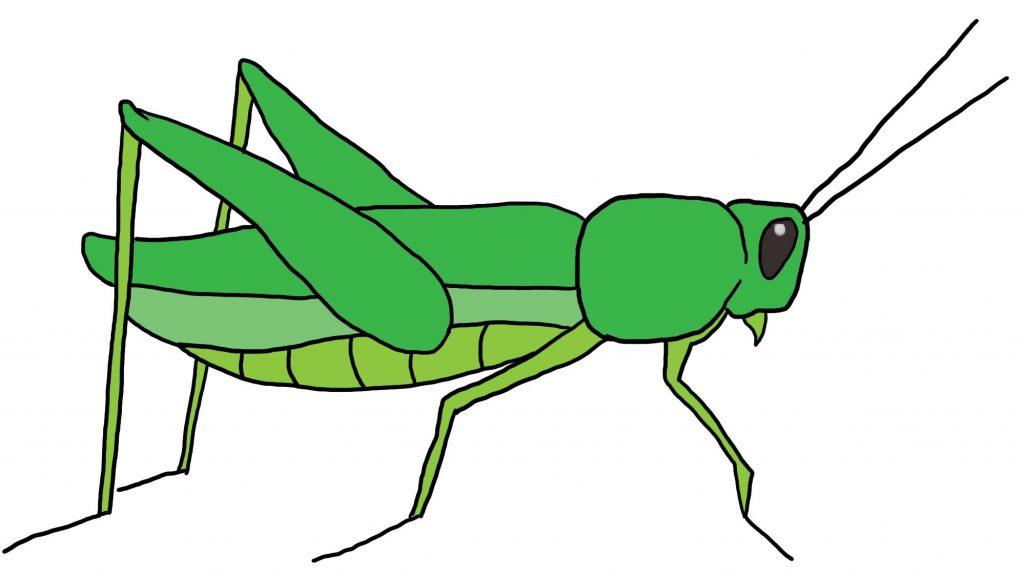 Vibrant Design Grasshopper Clip Art Clipart
