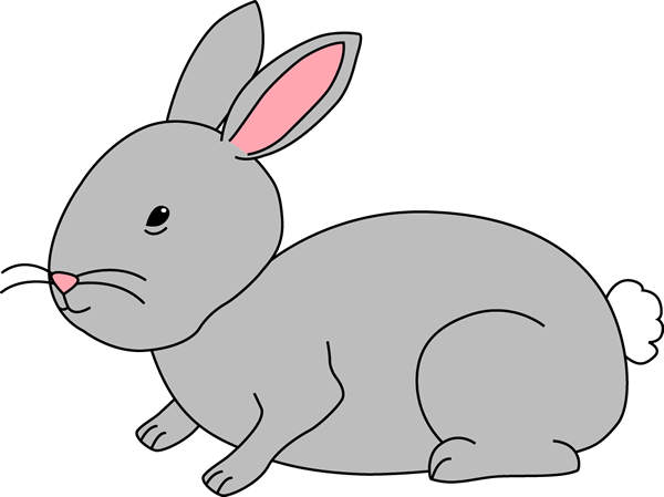 Gray Bunny Rabbit-Gray Bunny Rabbit-4