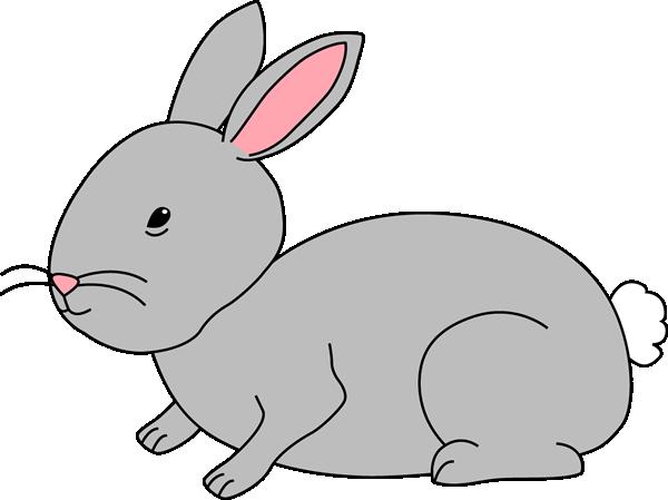 Gray Bunny Rabbit-Gray Bunny Rabbit-1