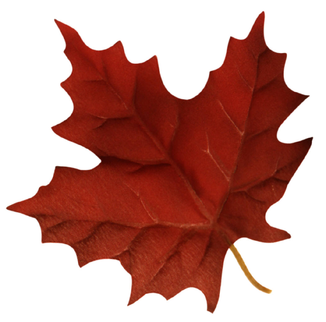 green maple leaf clipart-green maple leaf clipart-14