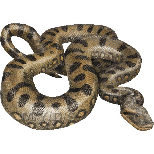 Green Anacondas clipart picture / Large