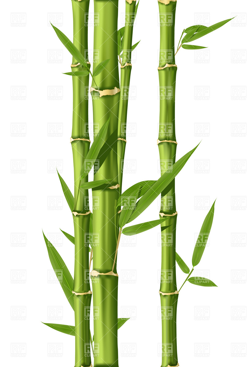 Green Bamboo Stems 4743 Plants And Anima-Green Bamboo Stems 4743 Plants And Animals Download Royalty Free-18