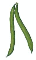 Green Beans Clipart