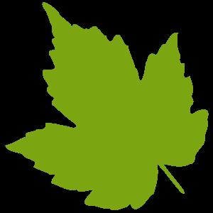 green leaf clipart