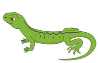 green lizard. Size: 43 Kb-green lizard. Size: 43 Kb-5