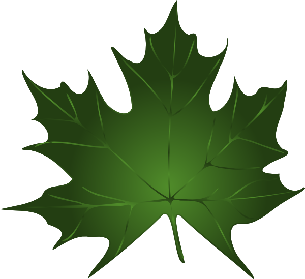 Green maple leaf clipart kid