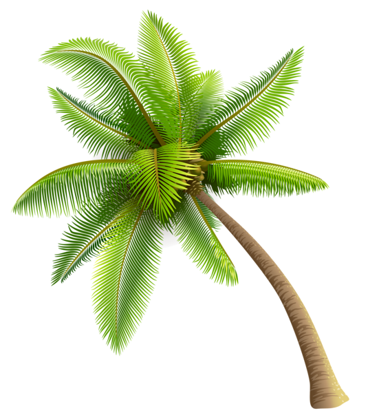 Green Palm Tree PNG Clipart-Green Palm Tree PNG Clipart-13