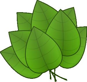 Green pumpkin leaf clipart .