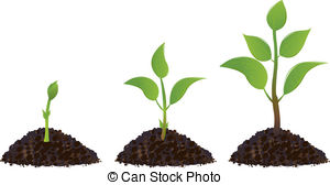 ... Green Young Plants - Green young plant life process,.