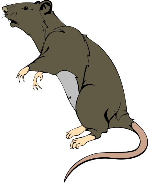Grey Greedy Rat Clip Art at .