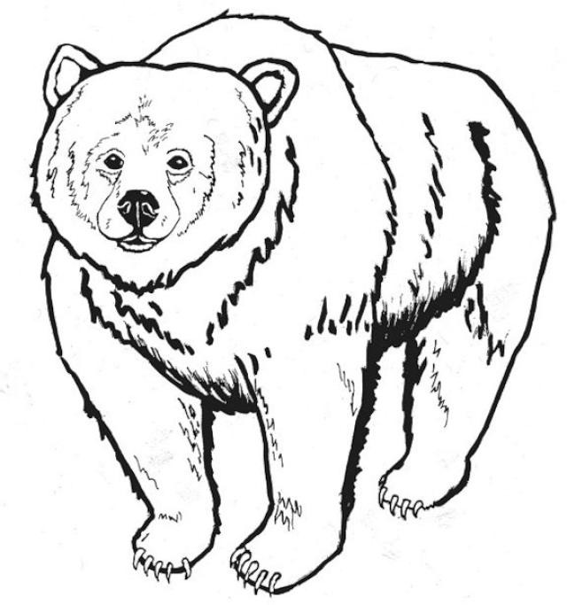 Grizzly Bear Coloring Page-Grizzly Bear Coloring Page-14