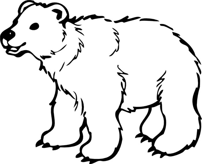 Grizzly bear silvertip bear c - Clip Art Bear