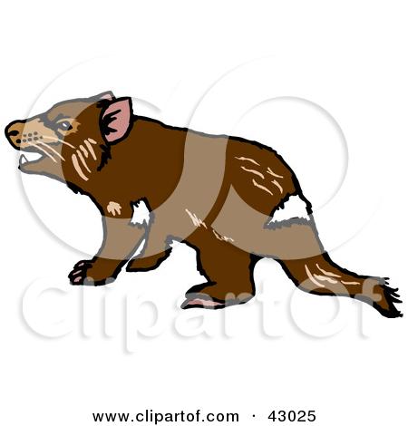 Grumpy Tasmanian Devil-Grumpy Tasmanian Devil-2