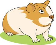 Guinea Pig 01b 116 Guinea Pig Clipart Hits 643 Size