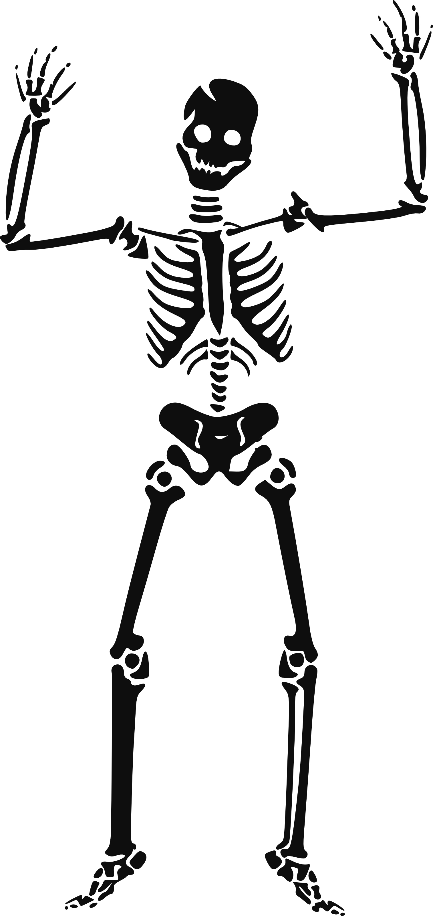 Halloween skeleton clipart free clipart images image
