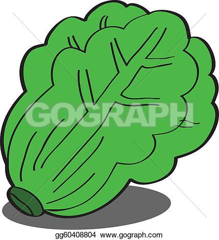 Hamburger U0026middot; Fresh Green Lettu-hamburger u0026middot; Fresh green Lettuce-6