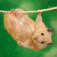 Hang In There Funny Photo: Hang In There-hang in there funny photo: Hang in there Hanginthere2_zpsa19f491c.jpg-5