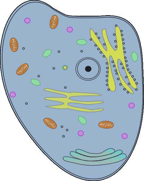 Happy Cell Clip Art At Clker Com Vector -Happy Cell Clip Art At Clker Com Vector Clip Art Online Royalty-1