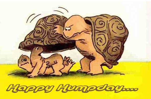 Happy Hump Day With Turtles! | Wednesday-Happy Hump Day With Turtles! | Wednesday: Itu0026#39;s Hump Day! | Pinterest | Turtles, Hump day and Happy-9