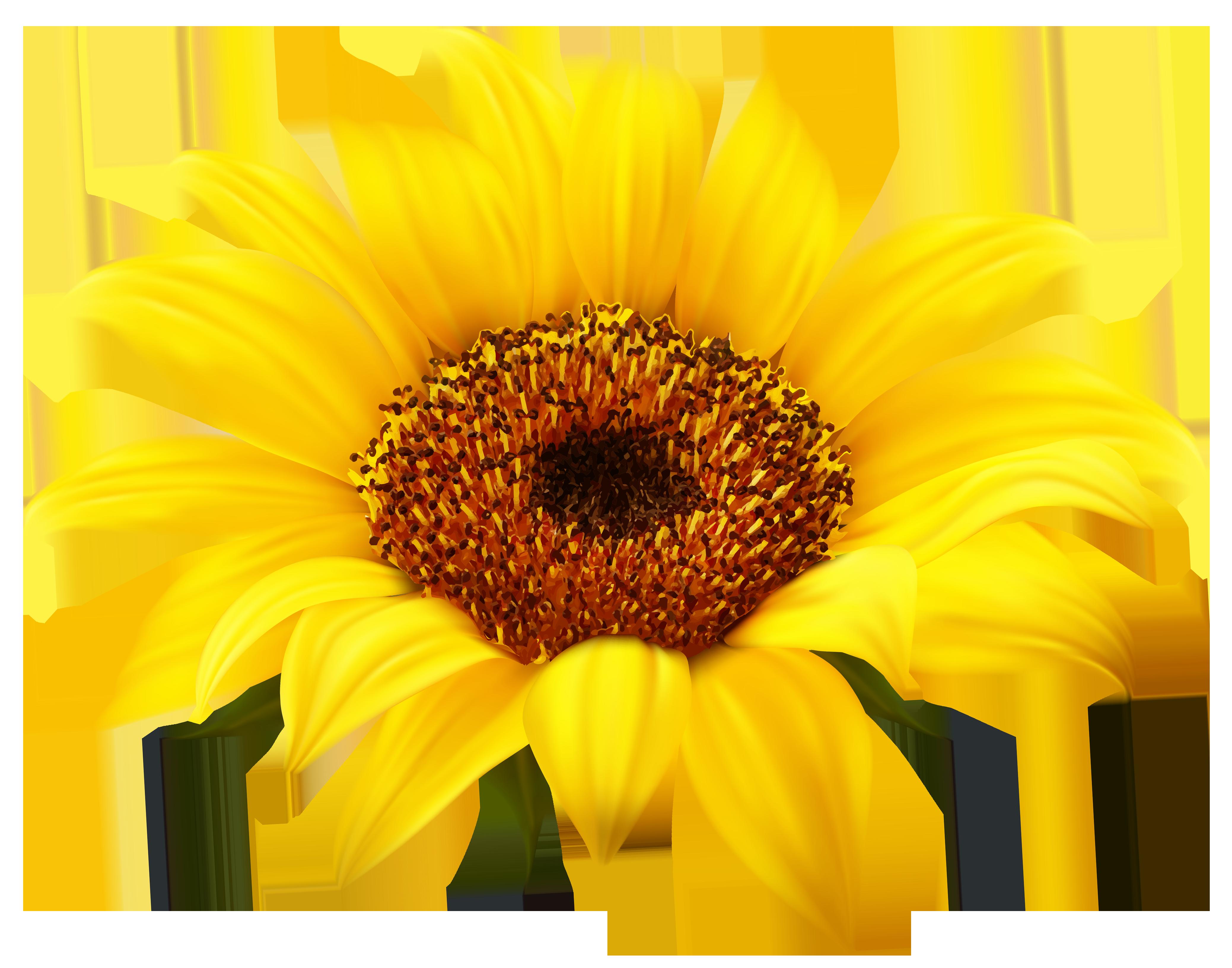 Happy Sunflower Clipart Free Clipart Ima-Happy sunflower clipart free clipart images clipartbold-8