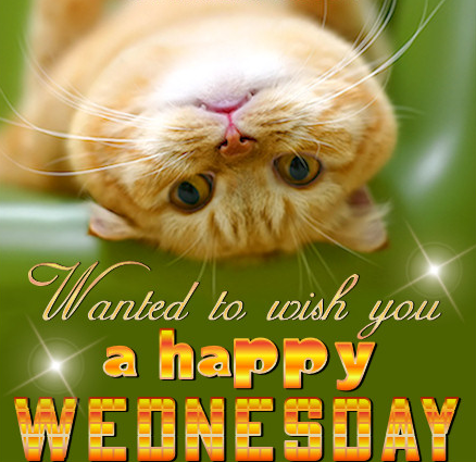 Happy Wednesday Cat .-Happy Wednesday Cat .-7