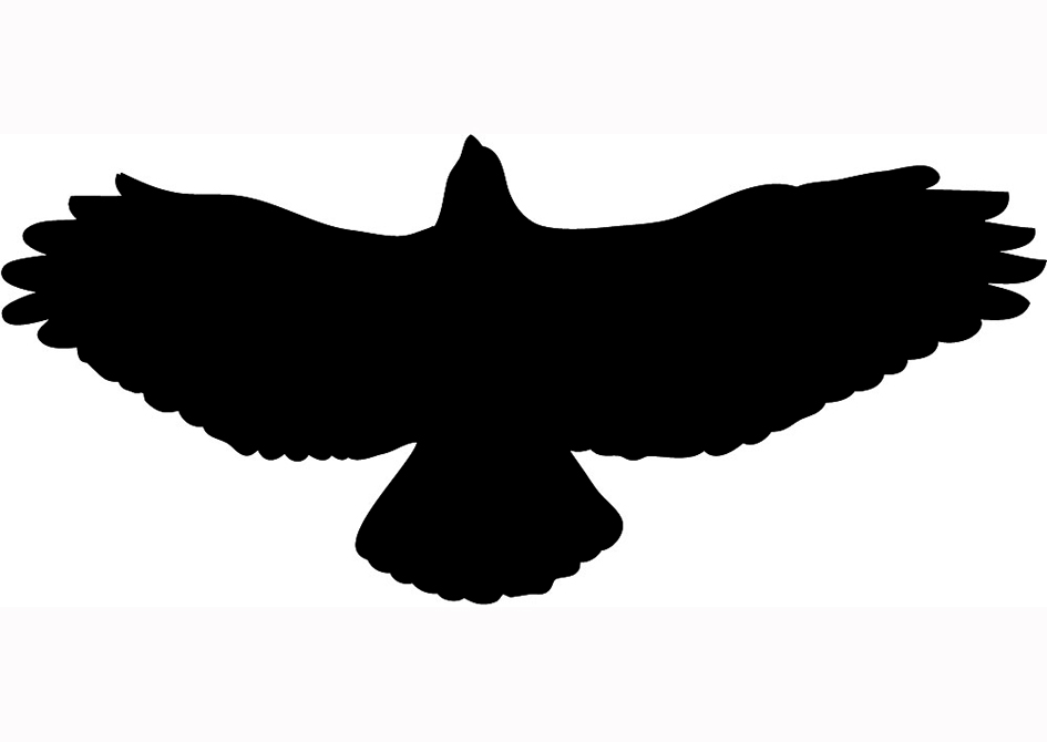 Hawk Silhouette Black Flying ...-Hawk silhouette black flying ...-14