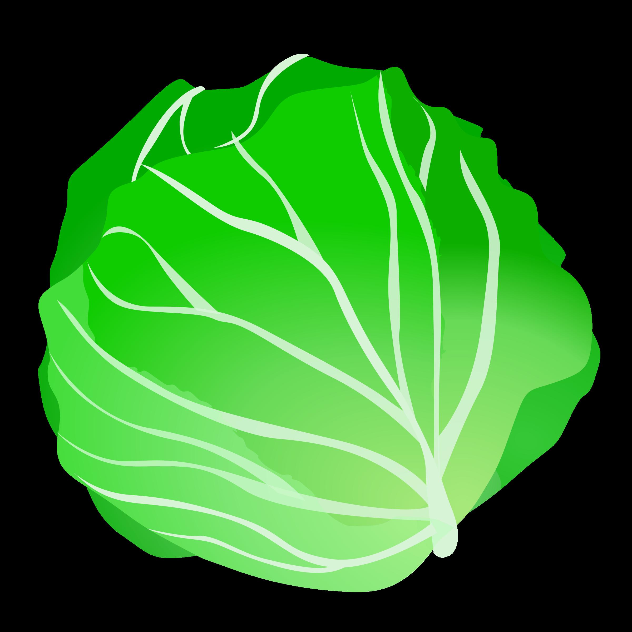 Head Of Lettuce Clipart Transparent Clip-Head of lettuce clipart transparent clipartall-7