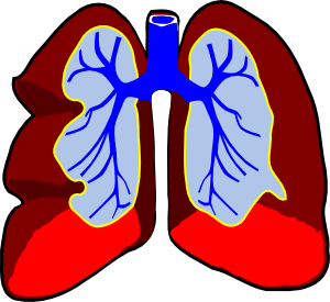 Healthy Lungs Clip Art