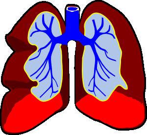 Healthy Lungs Clip Art-Healthy Lungs Clip Art-9