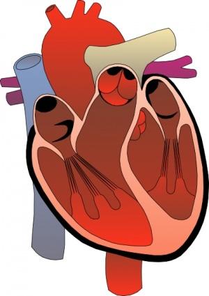Heart Disease Statistics Clip Art