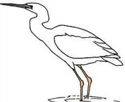 Heron-Heron-11