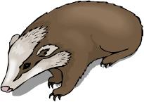 Honey Badger Clip Art For Custom Koozie -Honey Badger Clip Art For Custom Koozie Honey Badger Custom-15