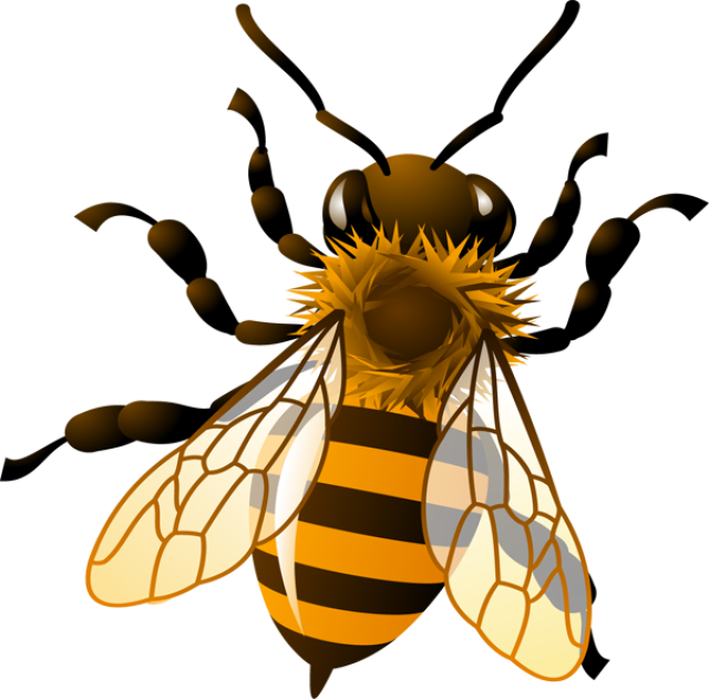 Honey Bee Clip Art Images .