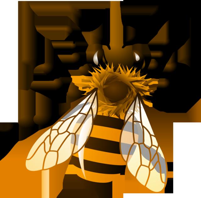 Honey Bee Clip Art Images .-Honey Bee Clip Art Images .-7
