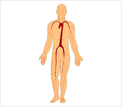 Human Body Clipart Cliparts Co