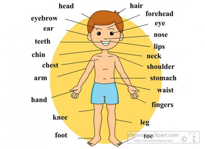 human body parts clipart human .