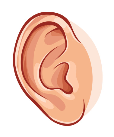 Human Ear Clipart - ClipartFest-Human ear clipart - ClipartFest-13