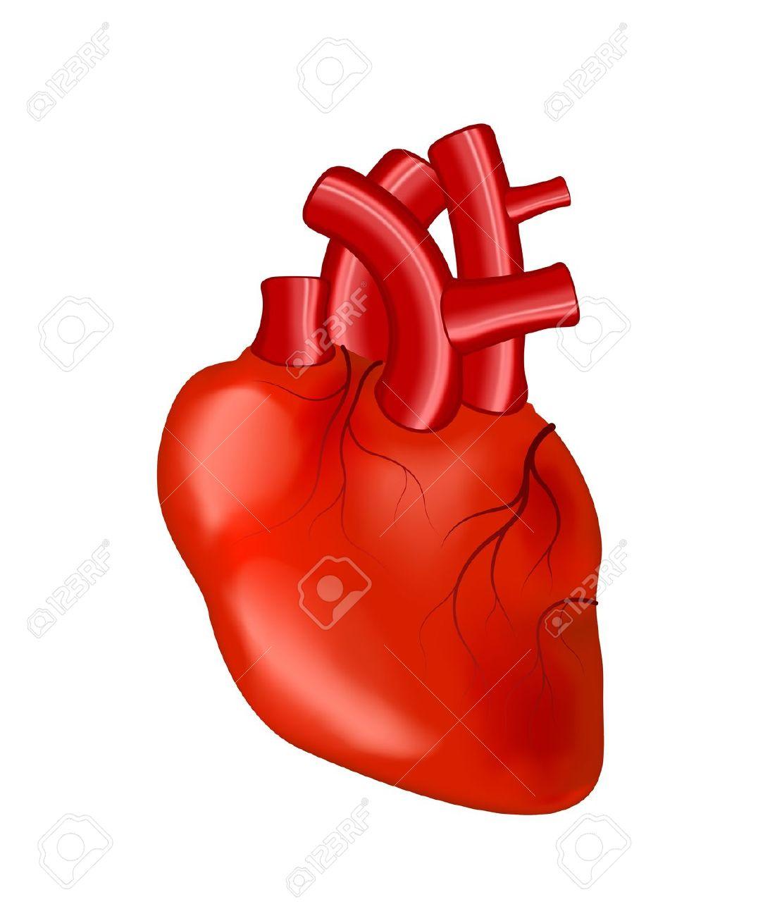 Human Heart Anatomy Cliparts .