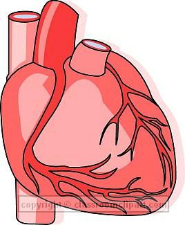 Human Heart Clip Art