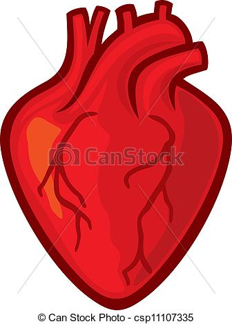 Human heart Drawingsby ...