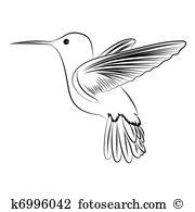 Humming Bird-humming bird-6