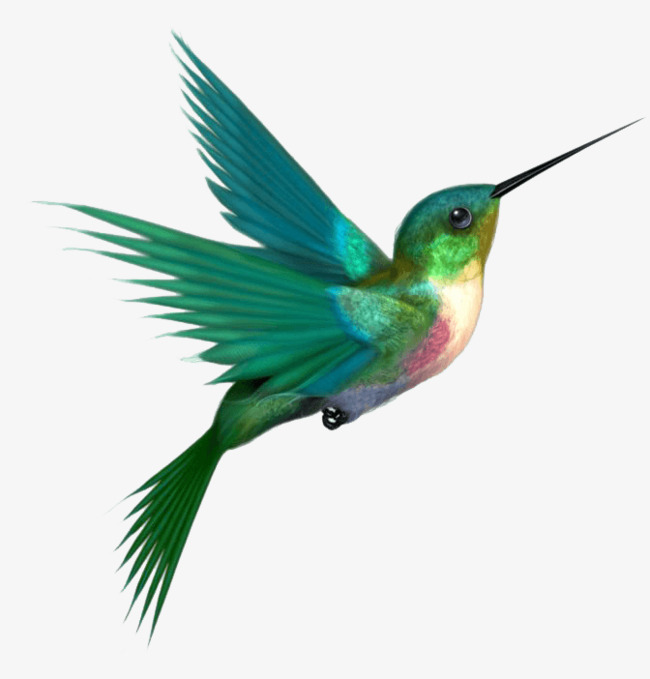 A Hummingbird, Hummingbird Clipart, Humm-a hummingbird, Hummingbird Clipart, Hummingbird, Green PNG Image and Clipart-3