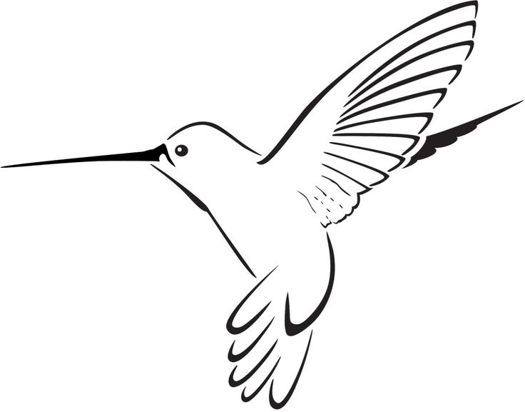 Hummingbird Clipart Free .-Hummingbird clipart free .-13