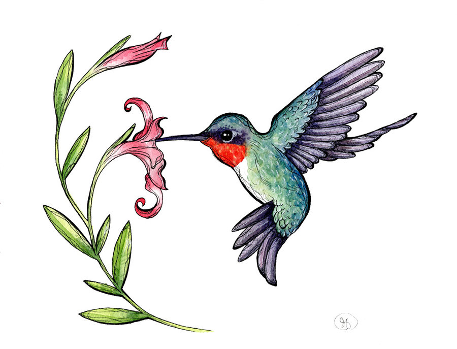 Ruby-throated Hummingbird Clipart #1-Ruby-throated Hummingbird Clipart #1-17
