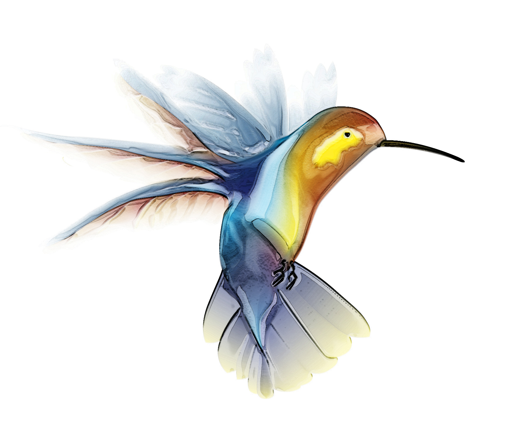 Hummingbird Image-Hummingbird Image-18