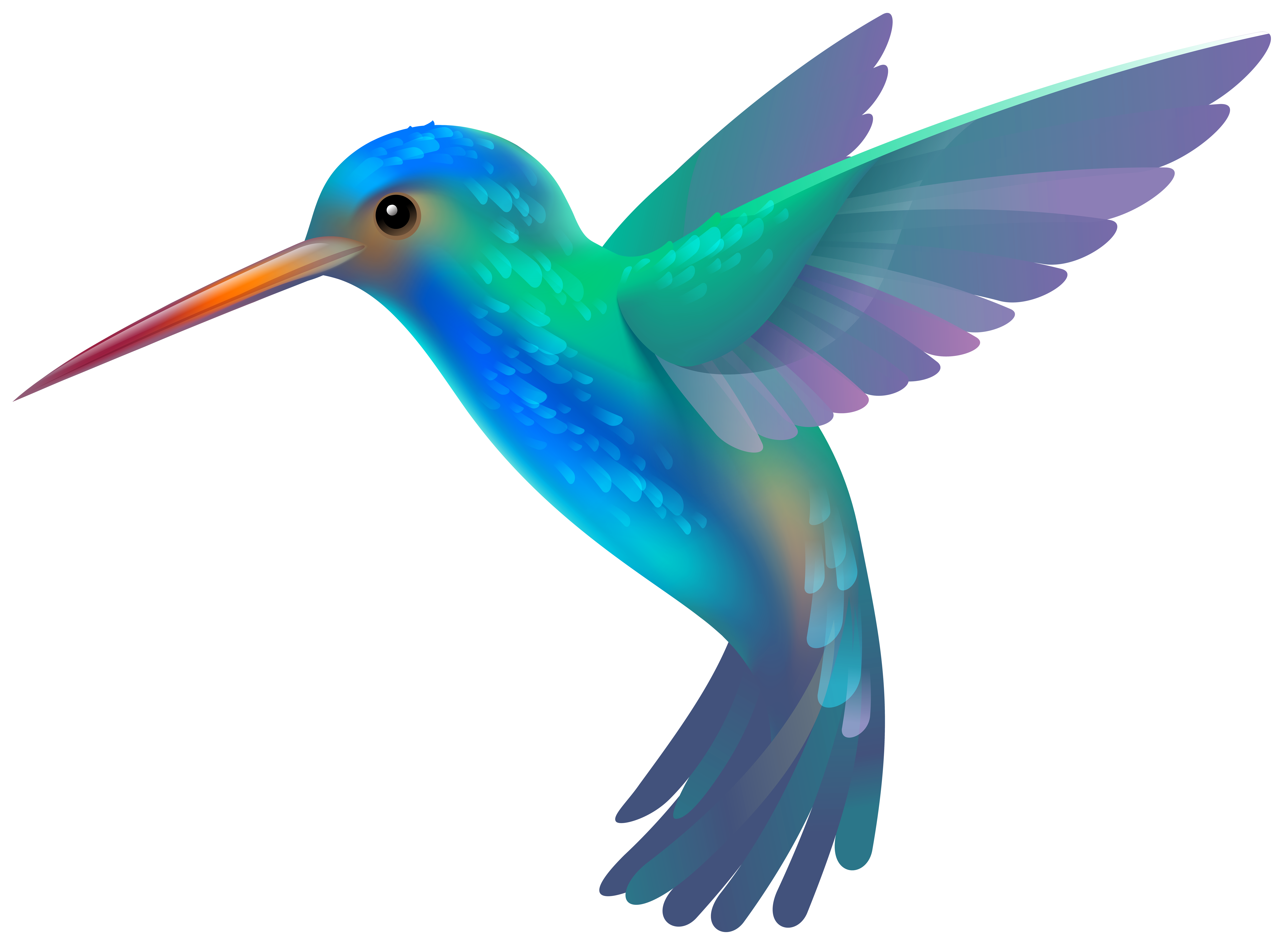 Hummingbird transparent clip art image