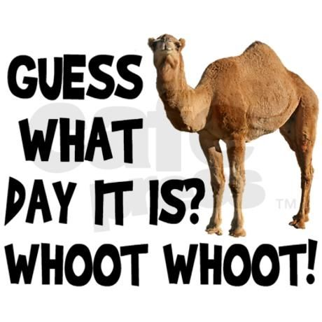 Hump Day Camel Pictures Photos And Image-Hump Day Camel Pictures Photos And Images For Facebook Tumblr-12